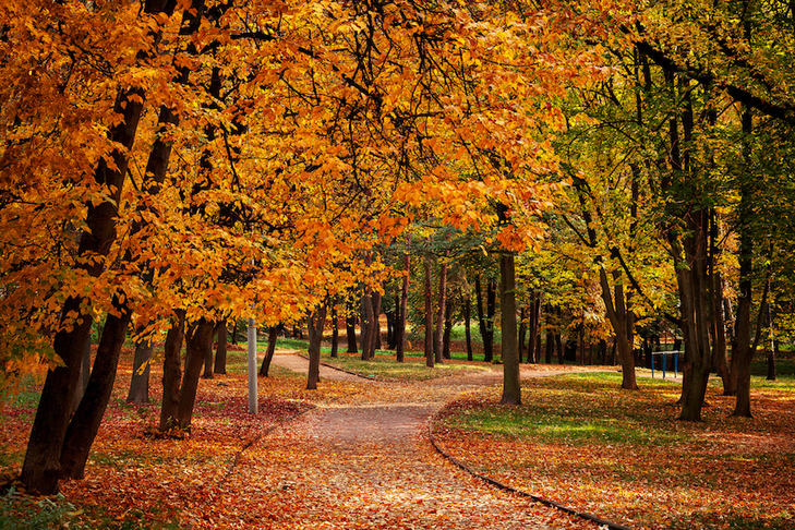Pictures of a walkway in the park with golden leaves. This was taken during the fall season in Tuscaloosa, AL