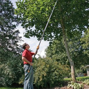 Tree pruning using a pole saw