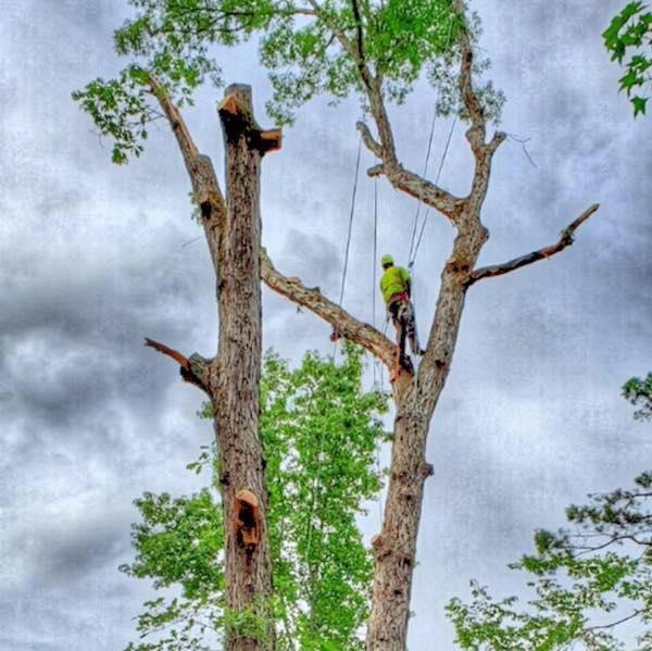Tree service Tuscaloosa, AL